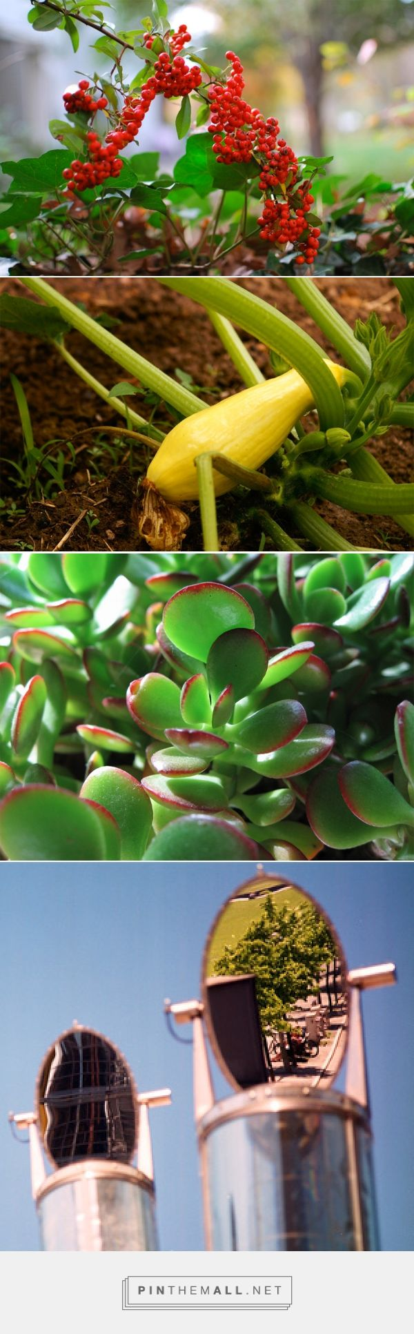 464 best plants images on pinterest gardening plants and
