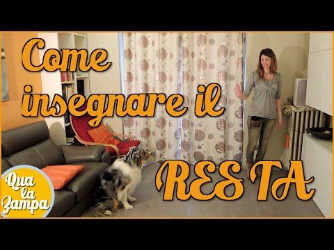 Addestramento/Educazione cani n°13 - Come insegnare il LASCIA| Qua la Zampa - YouTube