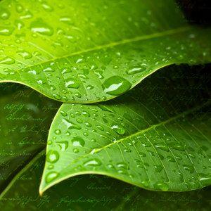 """Motiv """"Blatt mit Tropfen"""": Wassertropfen auf einem kräftigen Blatt in frischem, knackigem Grün. Satte Farben aus der frühlingshaften Natur."""
