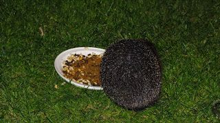 Hedgehog Watch Dublin: Hedgehogs and the Vet