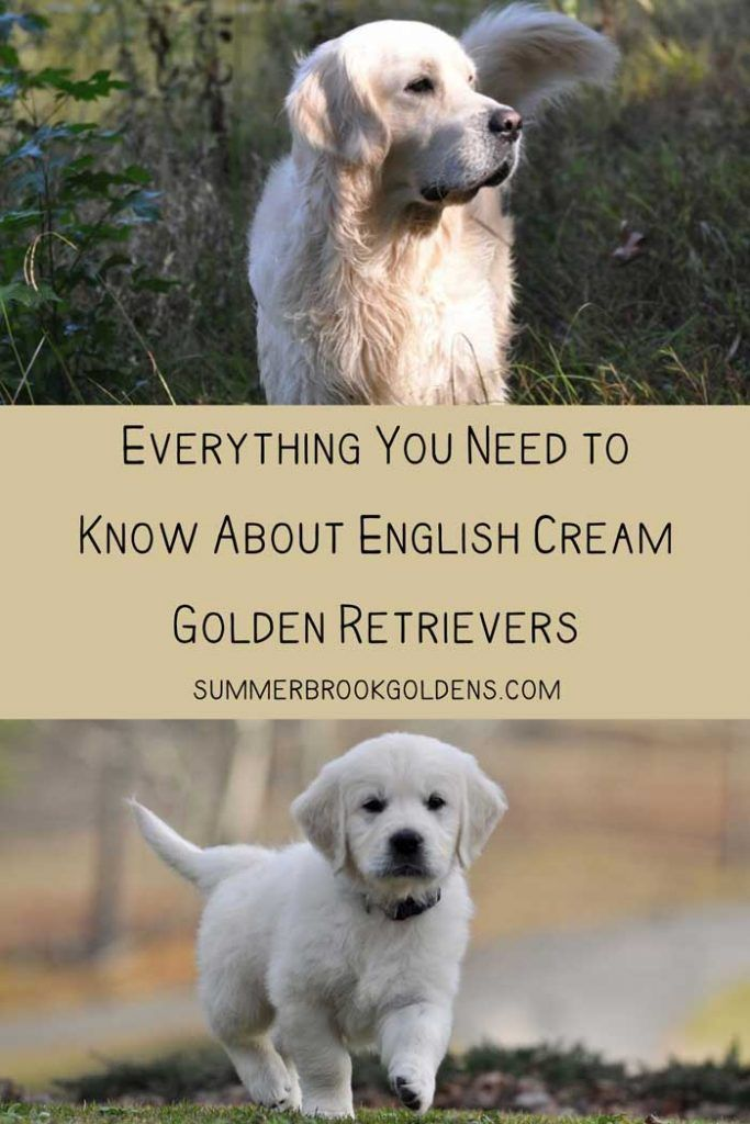 Find Out Everything That You Need To Know About English Golden