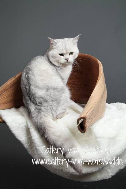 die besten 25 katzen fl he ideen auf pinterest fl he naturheilmittel floh und mittel gegen. Black Bedroom Furniture Sets. Home Design Ideas