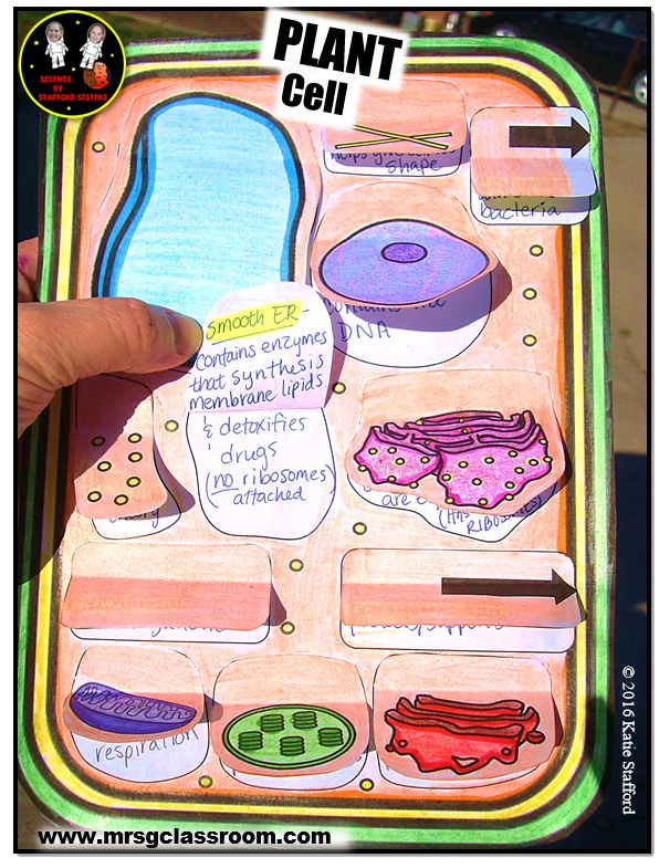 Science Interactive Notebook - PLANT CELL  Check out my SCIENCE BLOG for sales/updates/giveaways www.mrsgclassroom.com  Follow me on facebook https://www.facebook.com/mrsgclassroom