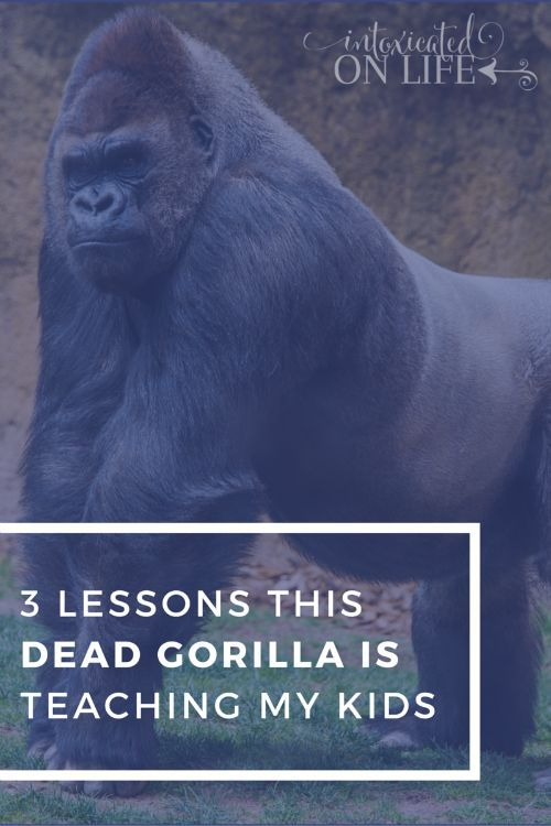 3 lessons this dead gorilla is teaching my kids (affiliate link)