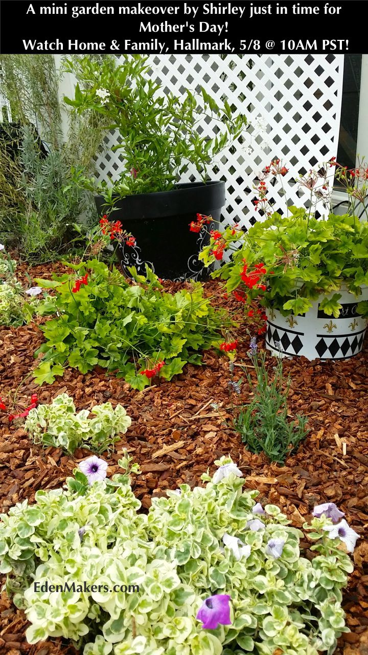 "Watch Shirley Bovshow on Home & Family show, Thursday, May 8 on Hallmark at 10 AM PST.  Check out my ""mini garden makeover"" you can copy for Mother's Day! A small, beautiful garden can have a huge impact in your yard!"
