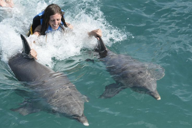 Dolphin Encounter at Isla Mujeres, Cancun
