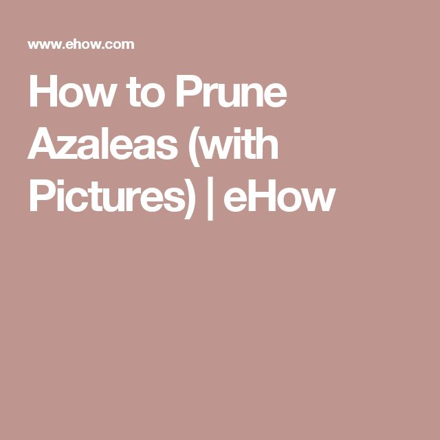 How to Prune Azaleas (with Pictures) | eHow