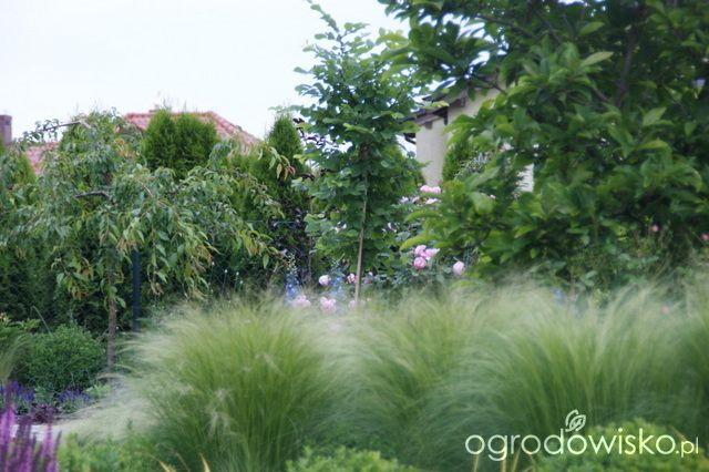 Madżenie ogrodnika cz. aktualna - strona 541 - Forum ogrodnicze - Ogrodowisko