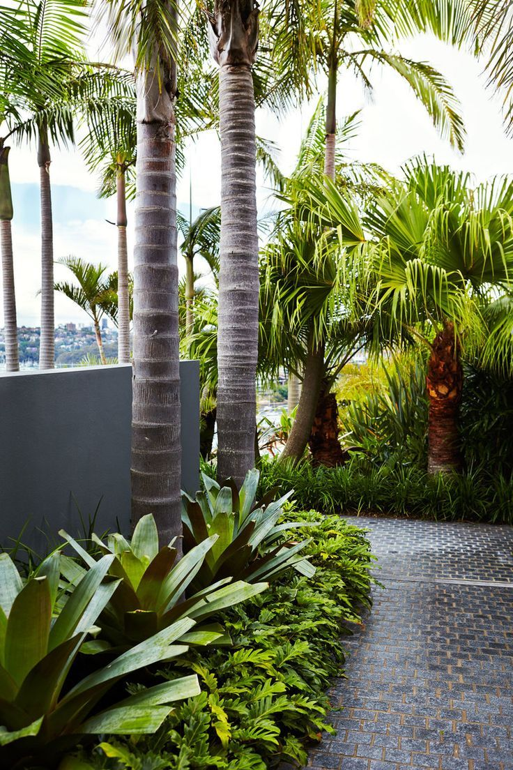 This border combination of just three plants works well and looks so neat and tidy.  Palms (maybe not as tall as these ones - something much smaller underplanted with bromeliads and xanadu)