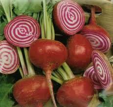 Organic Heirloom Seed Chioggia Beet Seeds Certified Organic