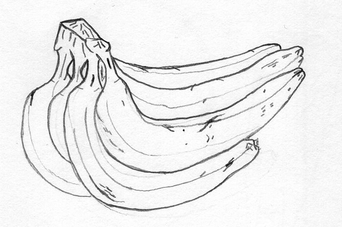 Contour Line Drawing Easy : Contour drawing banana google search