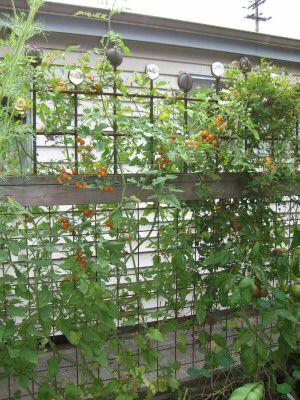 Backyard fence line inspiration edible garden for Vegetable garden trellis designs