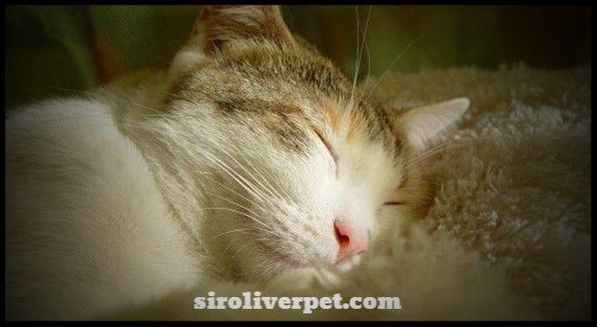 Perché il gatto ama dormire su di me?  Il gatto spesso dorme addosso al suo umano, sui piedi, sul letto, sulle gambe. Ma perchè i gatti amano così tanto il contatto fisico durante il sonno?  Cerchiamo di capire i motivi per cui il gatto dorme addosso ai suoi amati umani. Non è raro, infatti, vederli appollaiarsi sulle nostre gambe quando siamo seduti sul divano oppure in bagno, oltre a ritrovarli spesso sotto le coperte o sul letto insieme a noi durante la notte.  Alcuni esperti hanno…
