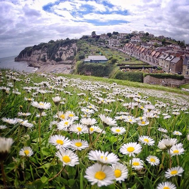The village of Beer is in southeast Devon, England, on Lyme Bay.