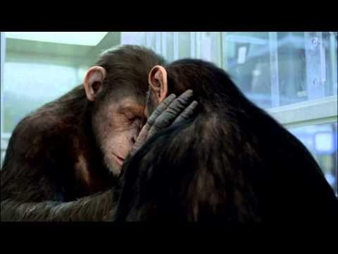 #Gratuit# La Planète des singes  l'affrontement Complet Films Francais