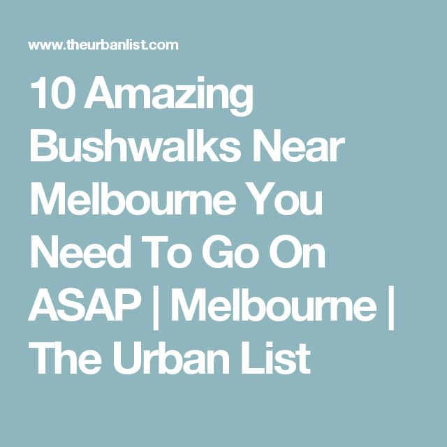 10 Amazing Bushwalks Near Melbourne You Need To Go On ASAP | Melbourne | The Urban List