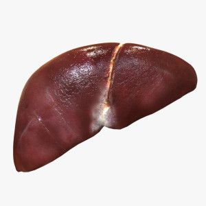 regenerated #liver #regeneration