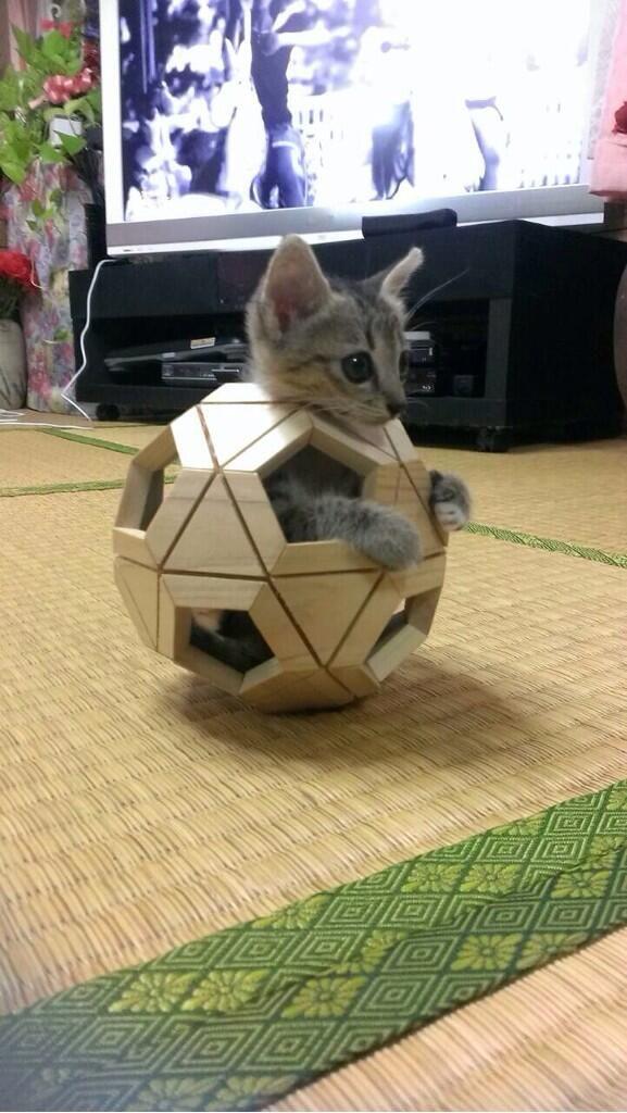 【猫】完全防備