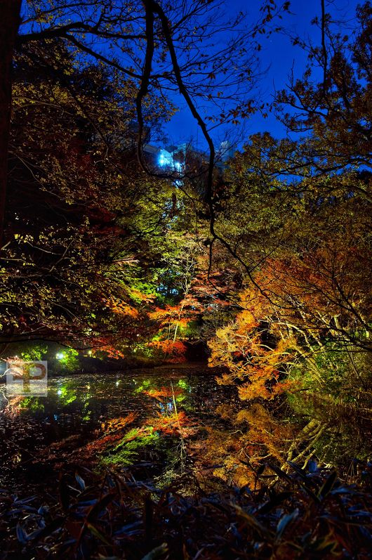 Nature's nightlife  ##timfranklinphotography ##tokyonight ##nightphotography ...