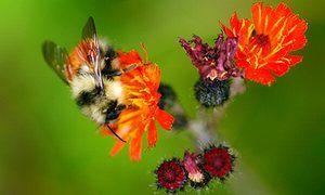 @xercessociety @GeneralMills & @USDA partner to restore #pollinator habitat on N American farms #bees #butterflies