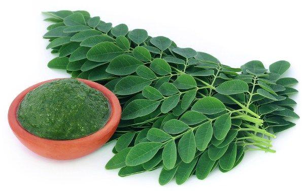Magische Pflanze Moringa – Das Kraut das Krebs zerstört und Diabetes stoppt