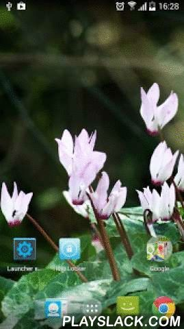 Real Flowers Live Wallpaper  Android App - playslack.com ,  Enjoy ☆☆☆ Real Flowers Live Wallpaper ☆☆☆!Enjoy these beautiful springtime flowers on a windy morning. If you enjoy the sight of pristine nature, and the magical relaxing sounds of a spring morning, then this is the perfect wallpaper for you!New improved version released with visual effects, and option to match time of day. Geniet van ☆☆☆ Real Flowers Live Wallpaper ☆☆☆ !Geniet van deze prachtige lente bloemen op een winderige…