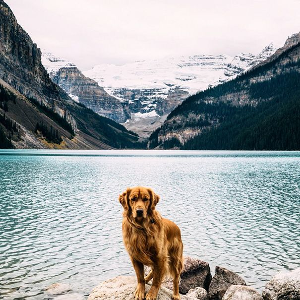 This is Aspen, a Golden Retriever from Colorado who proves that not only are dogs man's best friends, they also make the best travelling buddies.