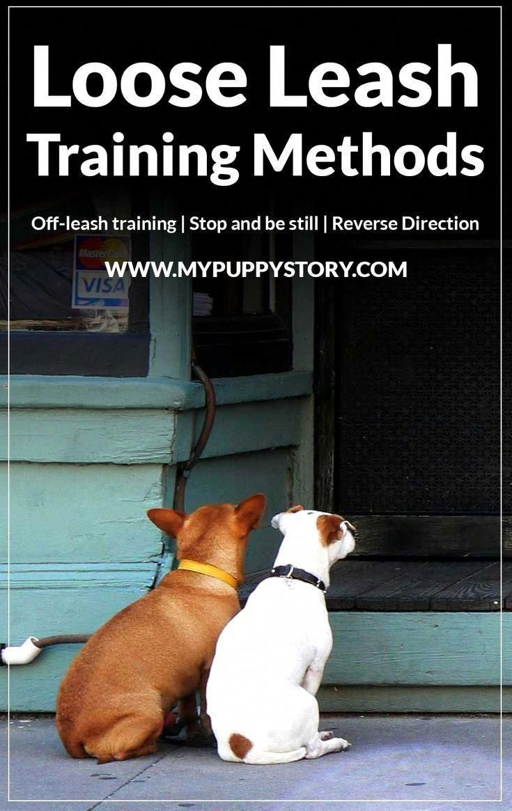 Dazzling Rehabilitated Dog Training For Obedience Leave A Review