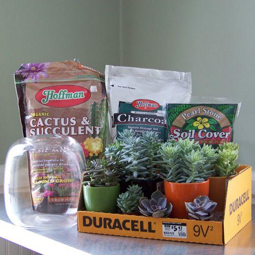 materials for a succulent terrarium