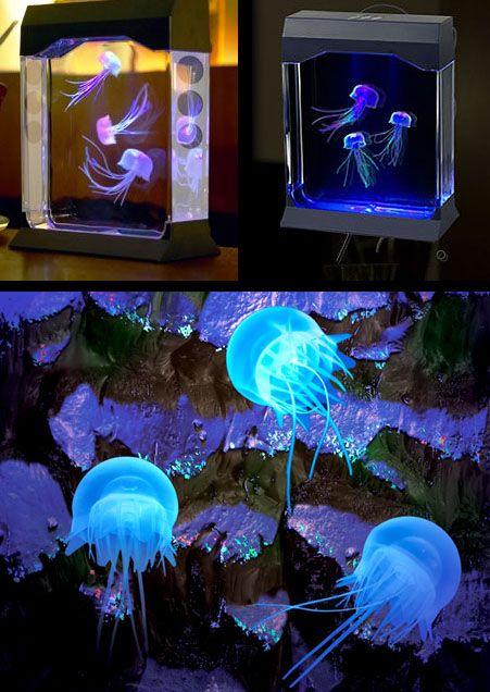 Jellyfish Aquarium. #jellyfish #aquarium