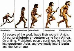 Para tratar la evolución del ser Humano accedemos a la lámina y en la parte inferior de la misma hacemos click sobre uno de los puntos y nos aparece esta imagen.