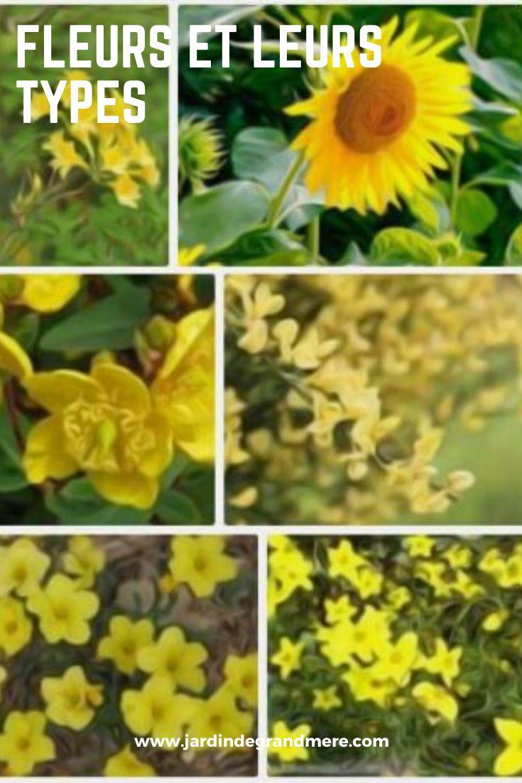 Fleurs et leurs types | Fleurs, Fleurs printemps, Planter ...
