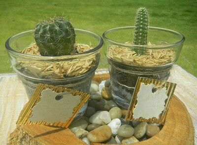 Recordatorios y decoración con mini cactus y suculentas