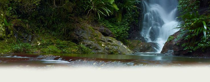 Lamington National Park - O'Reilly's Rainforest Retreat