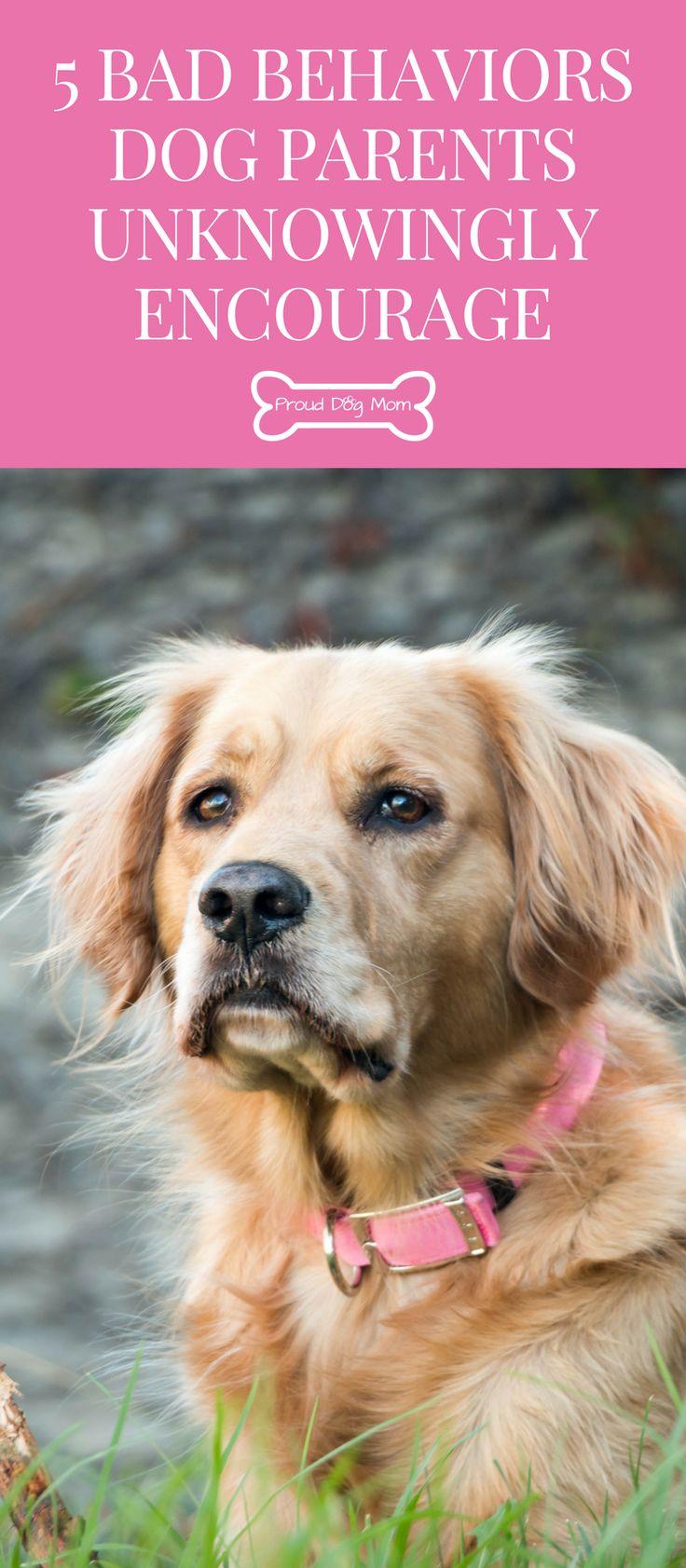5 Bad Behaviors Dog Parents Unknowingly Encourage | Dog Behavior | Dog Training Tips |