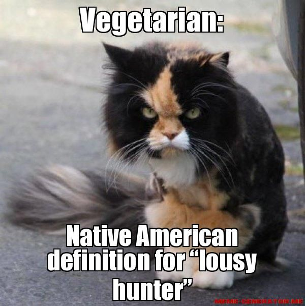 Ugly Birthday Cat: 123 Best Images About Native American Humor On Pinterest