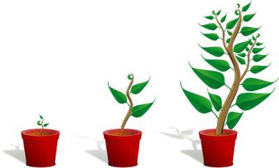 Πολλαπλασιασμός δέντρων με σπόρο: η διαδικασία ψύχους