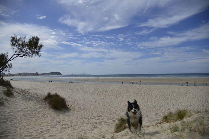 Palm Beach Dog Beach Gold Coast   Must do Brisbane