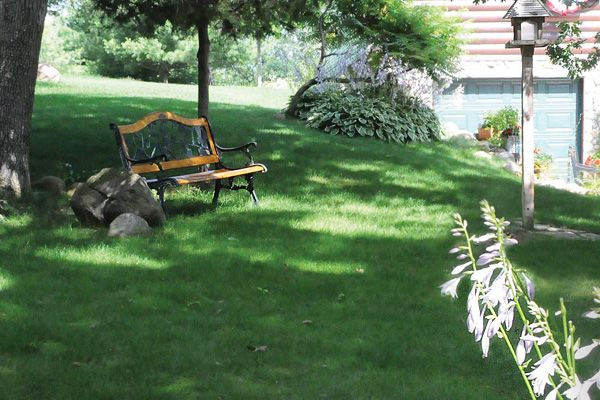 """""""No Mow Lawn Mix"""" is great for open, sunny swaths where native prairie grasses once grew, such as the cooler, medium-rainfall areas of the upper Midwest, Northeast, and Pacific Northwest."""