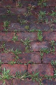 El bicarbonato de sodio neutraliza el pH en el suelo y nada va a crecer allí. utilizar bicarbonato de sodio alrededor de todos los bordes de canteros de flores para evitar las malas hierbas. Sólo rociar sobre el suelo de modo que cubra ligeramente. Haga esto dos veces al año - primavera y otoño.