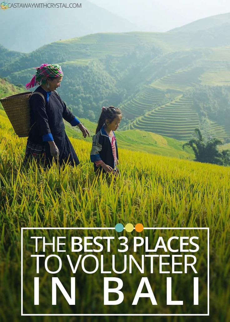 Want to volunteer in Bali? Here is a short list of the 3 best places to volunteer in Bali and why you should check them out right now! via @CastawayCrystal