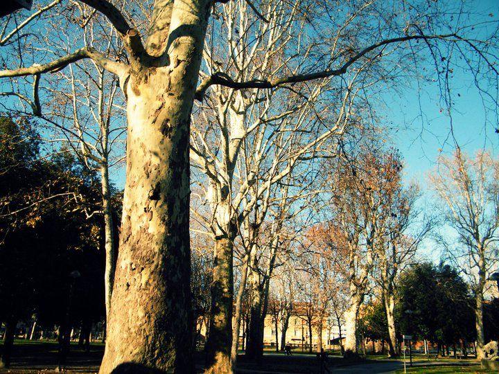 Parco della Montagnola Bologna - I Platani centenari
