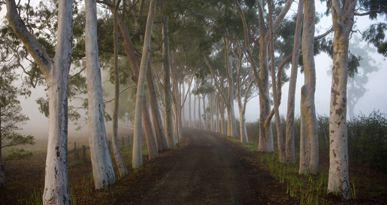 My absolute favorite driveway - by Edna WAlling, my favorite gardner x