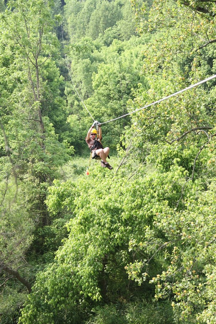 41 best backyard zip line images on pinterest backyards tree