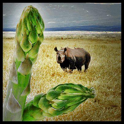 "Asparago: ""I rinoceronti sono vegetariani?"" #selfieterritori"