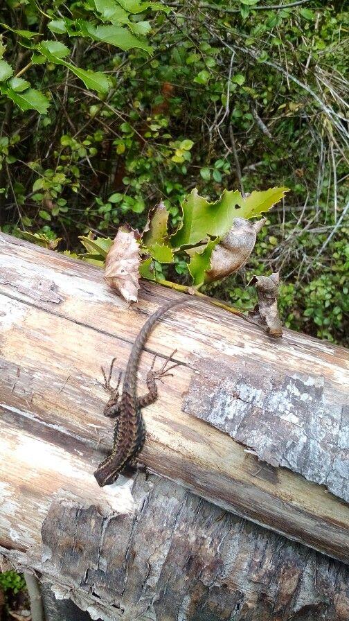 Reserva Biológica Huilo Huilo en Neltume, Los Ríos