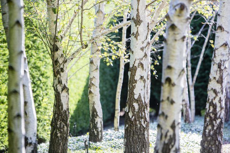 #peterfudge Birch