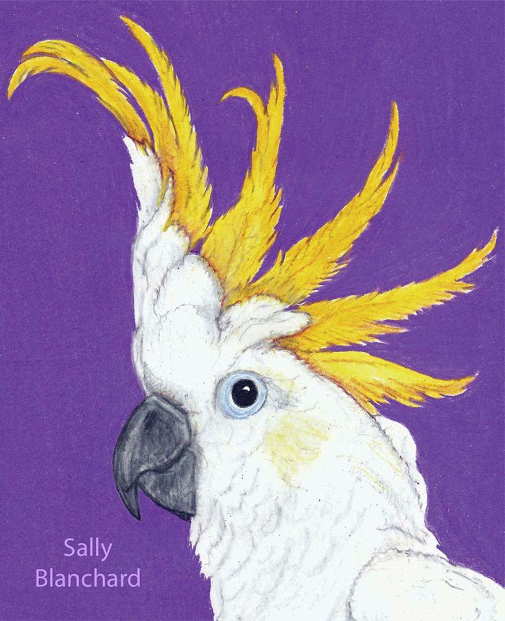 Sally Blanchard Prismacolor Pencil Drawing Galerita galerita Cockatoo Greater Sulfur-crested cockatoo portrait