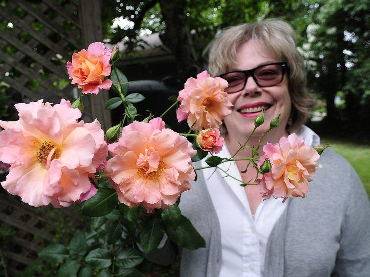 In The Garden: Ravishing roses a scented delight