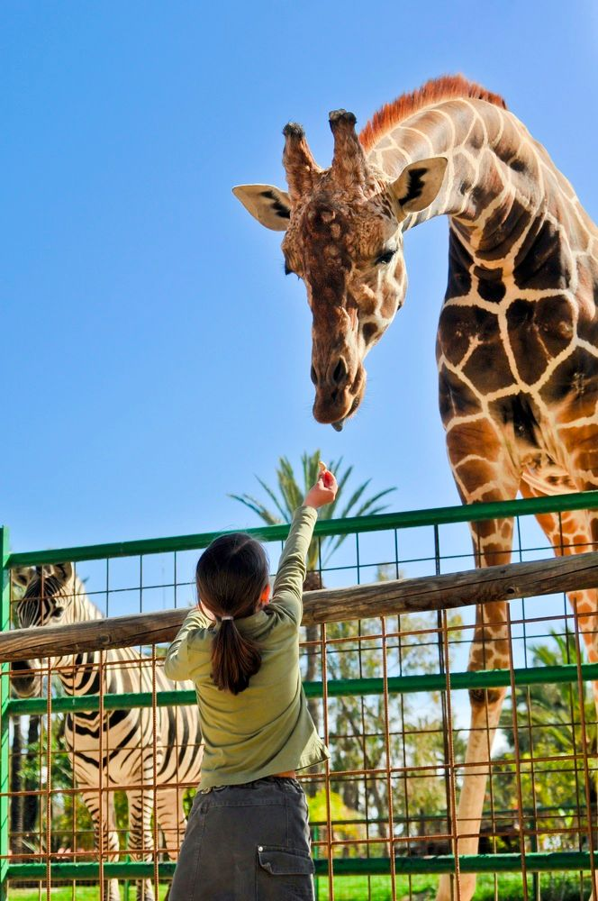 Get the Skinny on 10 Family Activities in Dallas!!!!  summerfun